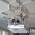 The Paradise birdcage